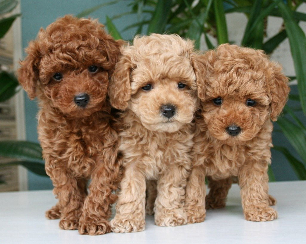 Pensione cani Varese